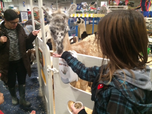 royal-agricultural-winter-fair-17