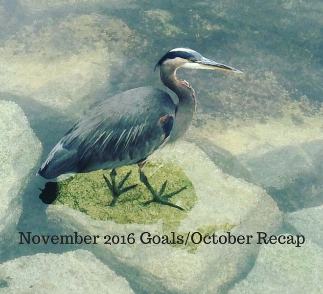 november-2016-goals%2foctober-recap-just-murrayed